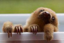 Hug a sloth!