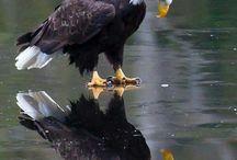 """Kuşlar ve Böcekler Aleminden Tefekkür Tabloları / """"Üstlerinde kanatlarını aça kapata uçan kuşları (hiç) görmediler mi? Onları (havada) rahmân olan Allah'tan başkası tutmuyor. Şüphesiz O her şeyi görmektedir."""" (Kur'an, Mülk, 67.19)"""