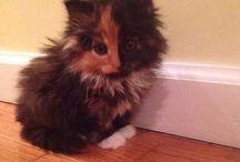 Kitties & Friends