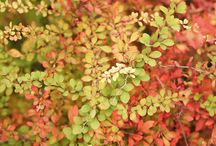 Plant These for Spectacular Fall Foliage! / Create a garden full of texture and fall color with these shrubs.