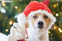 Christmas with Pets / Looking for tips, tricks, and other fun stuff for your pets during the holidays? You've found it here!