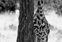 Wildlife......
