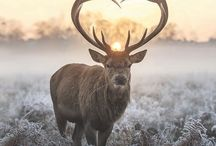 coole Tiere