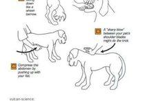 Animal Health & Tips
