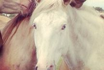 Horses / Horses owned by Hidden Acres Ranch