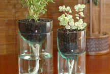 Plantes astuces