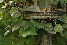 căsuțe pasarele