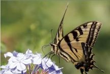 Gardening to Attract Butterflies and Songbirds / Gardening books focusing on attracting butterflies, hummingbirds, and other songbirds