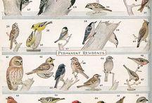 animalia | avian