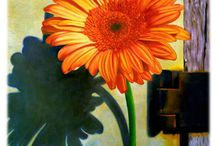 Flowers / by Michelle Mills