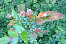 Color of nature. / Gewoon wat je tegenkomt onderweg.  Zoveel mooie kleuren,  gewoon voor het genieten!