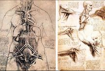 Anatomy drawings / Collection of anatomy drawings
