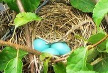 nesting / by Dancing Paloma