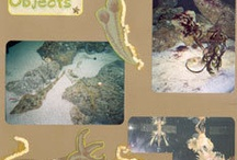 Scrapbook Pages - Aquarium / by Gabby Butterbaugh