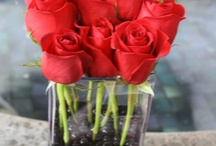 Reds and more / by Dixie Caro Sendra