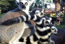 Zoologico Fuengirola / Paseo por el zoo de fuengirola con la familia