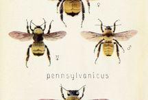 Bees / by Sarah Foulkes