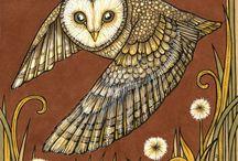 сова, перья, птицы OWLS