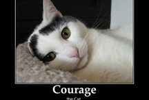Courage The Cat / Courage the #cat was rescued from the SWW Humane Society and now owns Andrea Waltz and Richard Fenton, authors of the best-selling personal development sales book, Go for No! Courage enjoys staring out the window from the 22nd floor of his downtown Orlando high rise, turkey and chicken pate, and snuggling.