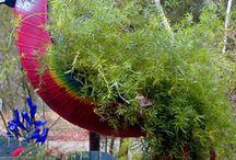 Mum's Backyard / by Jody Jones