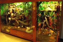 ex-situ, iguana,  exotic vertebrates, vivarium