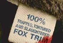 Anti-fur campaign