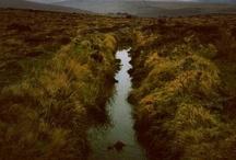 Landscape / by Awen Bree