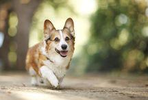 Hund og helse