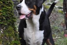 Honden / Dogs