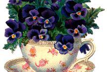 TEA CUPS AND TEA