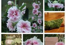 Gardening-Eadible flowers