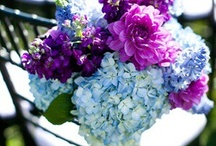 Flower Arrangements / by Kelly Serfes