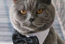 Curious Cats / Cats