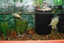Aquarie