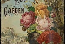 Vintage Plant & Flower Seed Catalogs and Packets / Vintage Plant & Flower Seed Catalogs and Packets