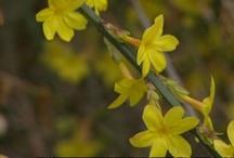 Winter-Blüten / by pflanz pflanz
