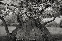 alberi, arbre, tree