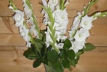 Gladiolus Wedding Flowers