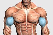 Muschi antrenamente