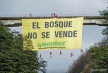 Campaña de Bosques