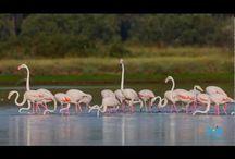 Natura / Immagini della Natura più affascinante!