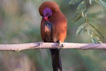 birding / Birding photography, Birdwatcher