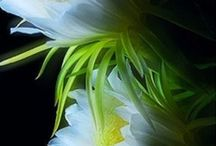 Flower delight / flowers / by Karin Teresinski