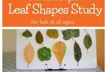 Montessori leaf cabinet