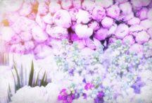 violette's tale