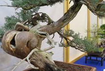 Bonsai / by Halleck Horticultural