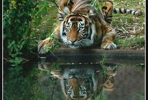 Animals / by Judy Hart