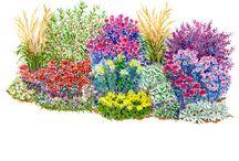 Yards,gardens,plants / by Judy Reifler