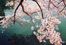 Spring!! / by Madeleine O'Hara