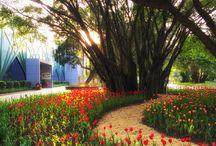 SEADC flower park
